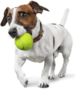 dog-with-ball