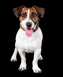 Dog Behaviourist Southampton
